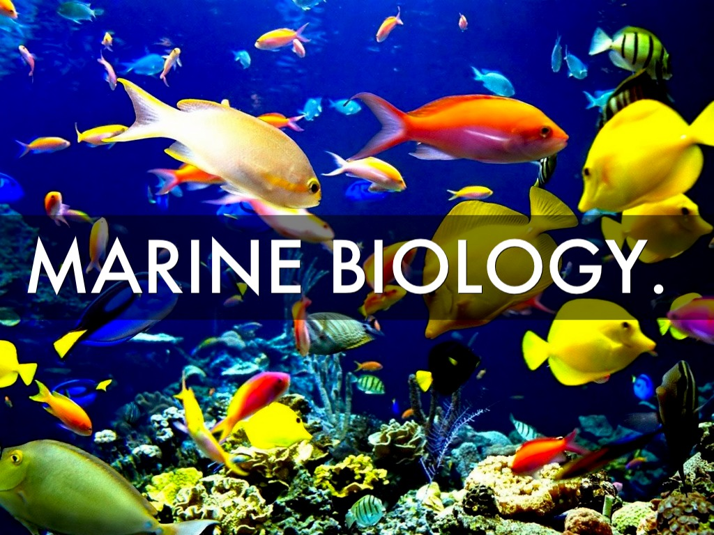 Requirements for Marine Biology in Unilag